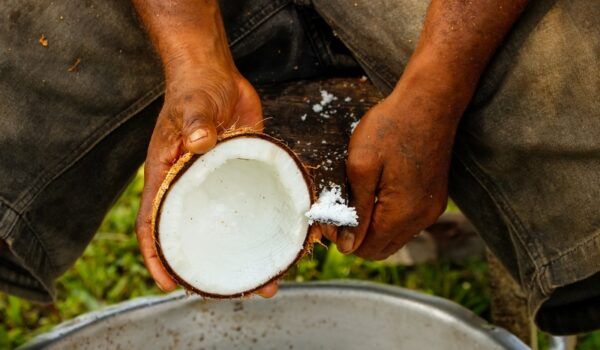 Top 5 Excuses to Avoid Scraping Coconuts on Sunday Mornings